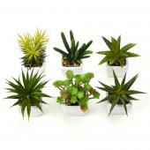"Decostar™ Succulents 2¾"" 6pcs/set  - 12 Sets (72 Pieces) - Green"