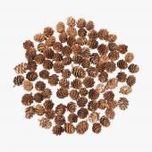 Natural Mini Pine Cones - 8oz