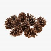 Natural Large Pine Cones 10pc/bag