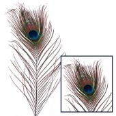 "Decostar™ 12"" Peacock Feather - 72 Pieces"