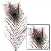"Decostar™ 12"" Peacock Feather - 72 Pieces"