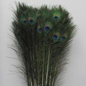 "Decostar™ Peacock Feather 35""-39"" - Pack of 100!"