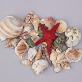 Decostar™ Seashells Assorted - 24 Bags