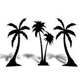 Florida Palm Trees Cut Out Silhouette