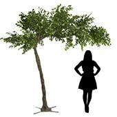 11 Feet Tall Grand Arch Fake Fig Leaf  Tree