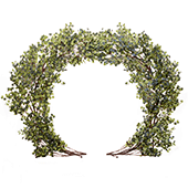 Round Eucalyptus Leaf Wedding Ceremony Arch - 8 Feet Tall