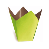 OASIS Clayrton's Stampo Container - Green & Choco - 25/Pack
