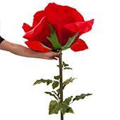 Jumbo Rose 65