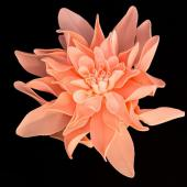 "11"" DecoStar™ Deluxe Dahlia Foam Flower -  Peach/Light Pink"